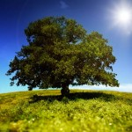 Tree-in-a-green-field-[iStock_000014408068XLarge]